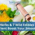 5 Herbs And 7 Wild Edibles To Nutrient Boost Your Smoothies