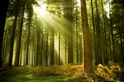 Forest Gardening: Creating Microclimates for Peace