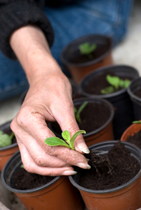how to plant your own herb garden with tera warner