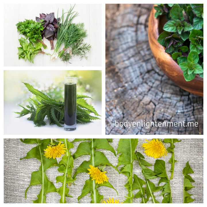 herbs and wold edibles for a healthy lifestyle