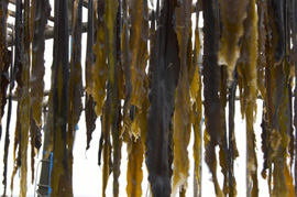 remineralize your body with sea vegetables