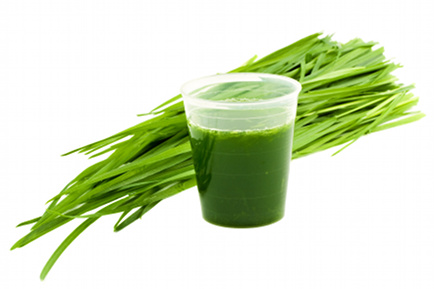 Why Waste Money On Expensive Wheatgrass When You Can Have It Wild And Free Instead?